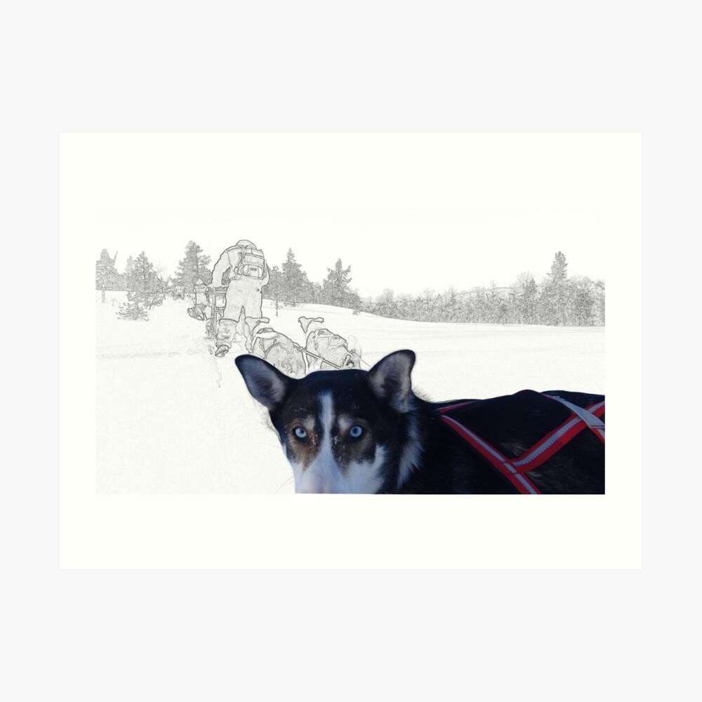 Husky-trektocht-storytelling-aurealisCreatief
