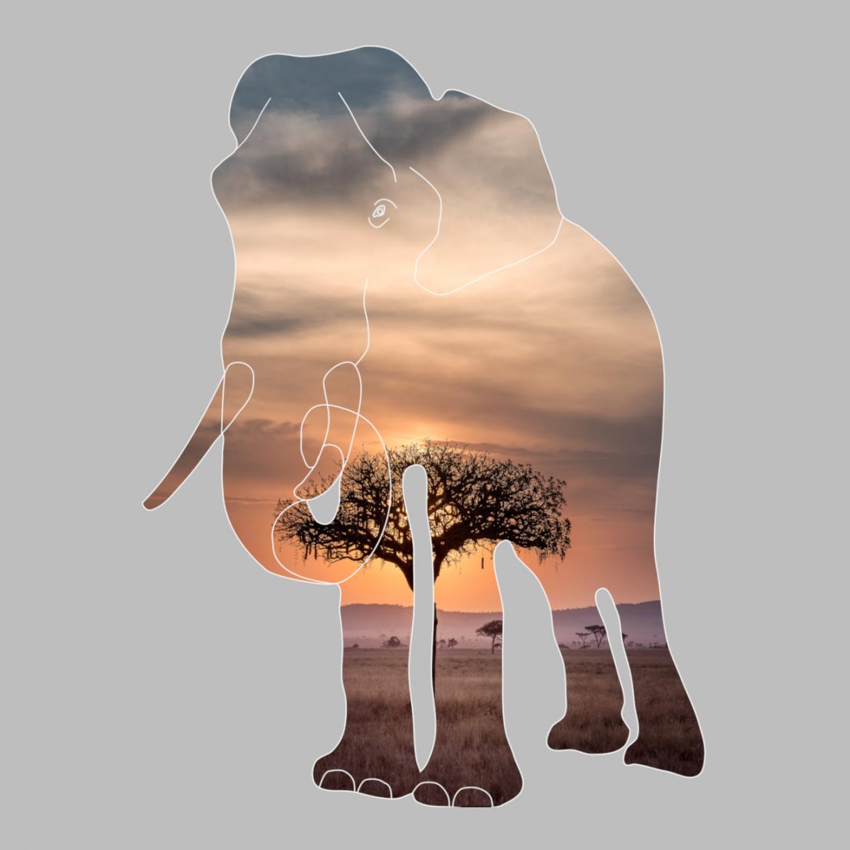 Elephant in the savanna - photografic design